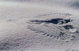 raven.snow